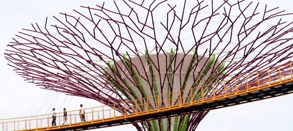 Чудо-деревья в сингапурском парке Gardens by the Bay                 3