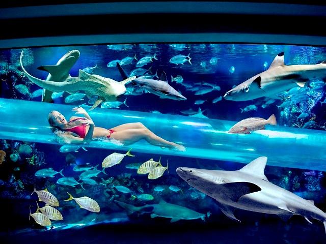 Топ-5 самых красивых и необычных бассейнов мира  Golden Nugget Hotel Las Vegas