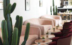 кактусы как стильный элемент декора Флора в интерьере   кактусы как стильный элемент декора c04f4338b2a9374fce5a930e40b06449 1 240x150
