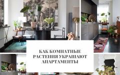 апартаменты Как комнатные растения украшают апартаменты                                                                                    240x150