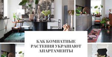 апартаменты Как комнатные растения украшают апартаменты                                                                                    370x190